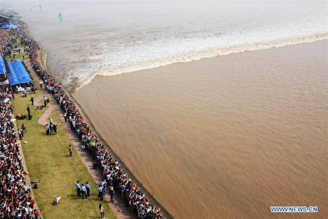 又到钱塘江观潮时 Qiantang tidal bore reaches peak