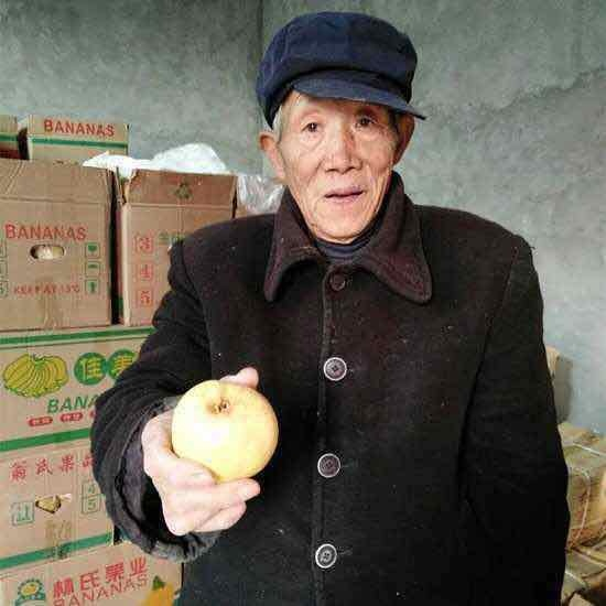 74-year-old pear farmer Zheng Zhilong shows off a pear at his home in Shaanxi Province. [Photo: China Plus]