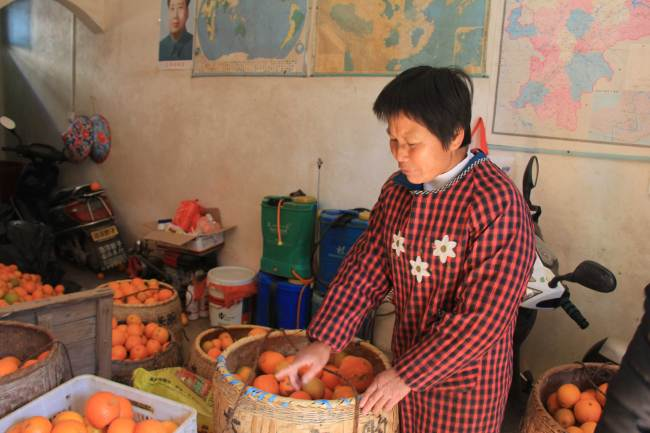 Deng Daqing's wife Zhu Luanfang takes stock of their latest harvest on December 20, 2017. [Photo: China Plus/ Li Shiyu]