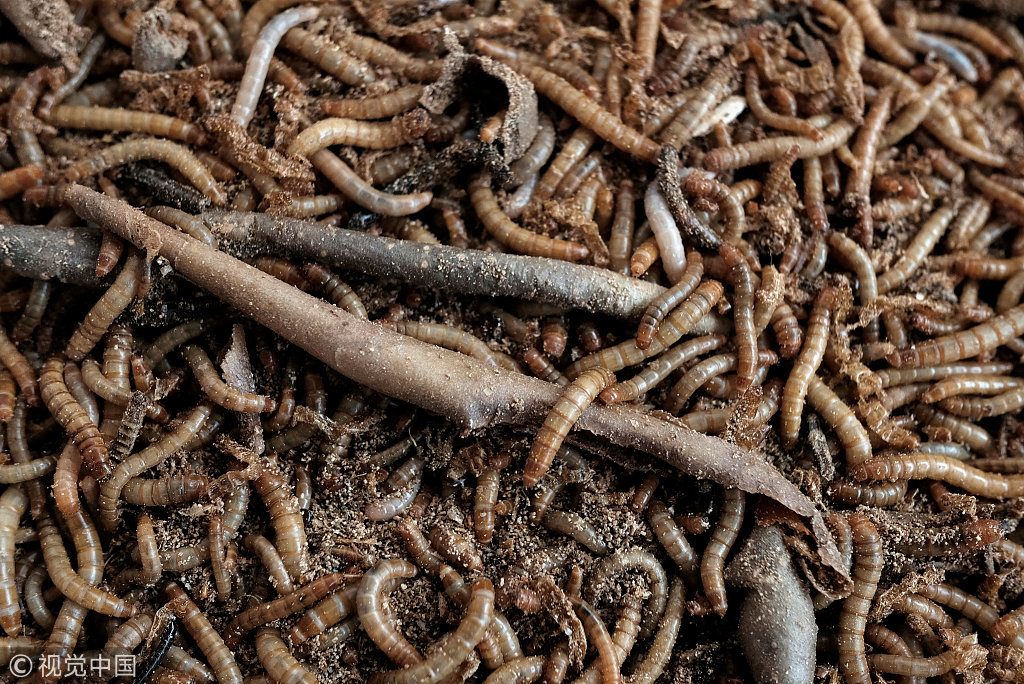 Hong Kong firm launches desktop farm for edible insects - China Plus
