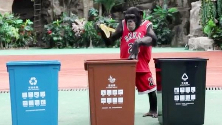 Chimpanzee learns Shanghai's garbage sorting rules