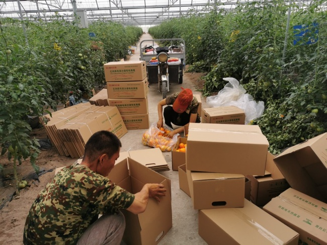 Local workers are packaging the fruits and vegetables in the organic farm.[Photo: from China Plus]