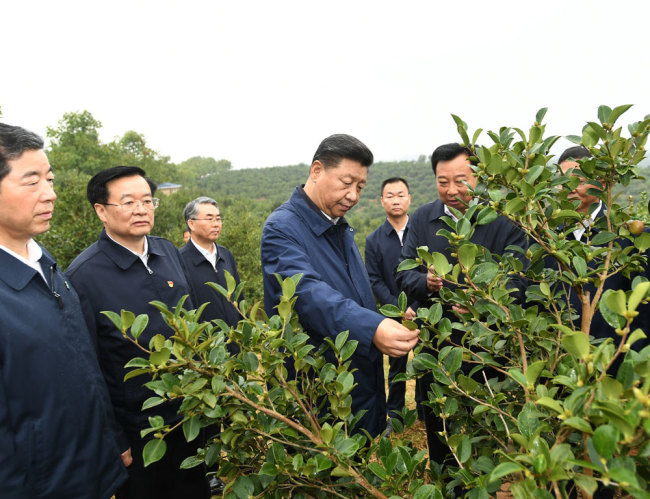 Xi Jinping, general secretary of the Communist Party of China Central Committee, inspects a tea plantation in Guangshan county, Henan province on Tuesday, September 17, 2019. [Photo: Xinhua]