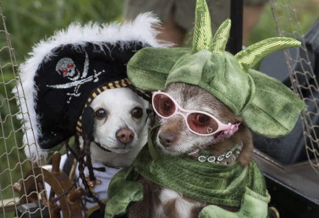 File Photo: Dogs are dressed up during the annual Haute Dog Howl'oween parade in Long Beach, California, on October 27, 2019. [Photo: AFP/Mark Ralston]